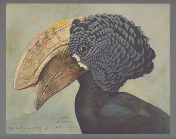 Image for Album of Abyssinian Birds and Mammals from Paintings by Louis Agassiz Fuertes