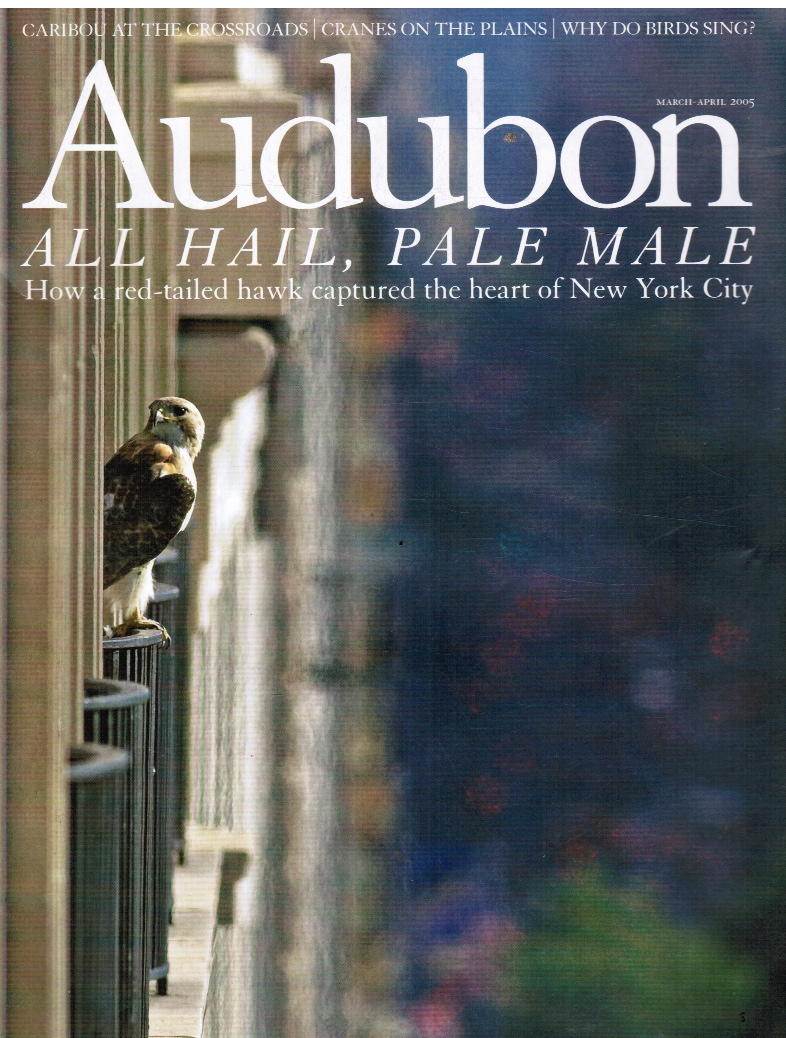 Image for Audubon March-April 2005, Volume 107, Number 2   How a Red-Tailed Hawk Captured the Heart of New York City