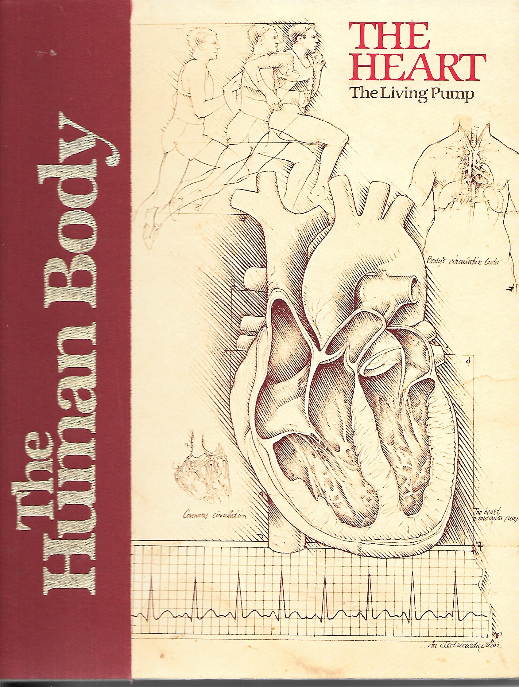 Image for The Heart The Living Pump
