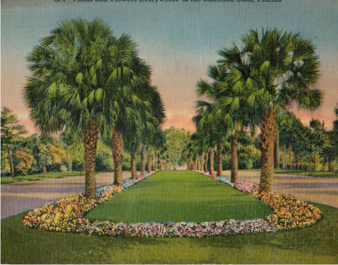 Image for Giant Post Card: Palms and Flowers Sunshine State, Florida